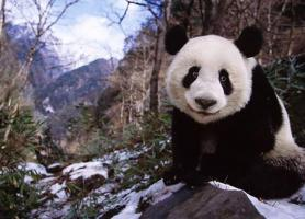 راهنمایی برای سفر به چین پهناور