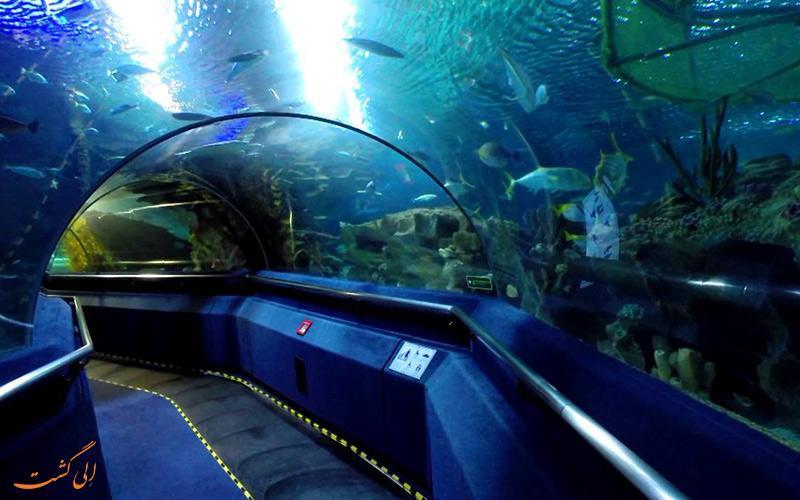 آکواریوم کوالالامپور در مالزی، گشتی امن در دل اقیانوس ها