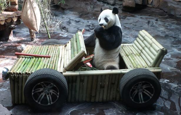 تصاویر روز: از پرواز هم زمان صد ها بالون در آسمان فرانسه تا هدیه جشن تولد 9 سالگی یک پاندا در باغ وحش چین