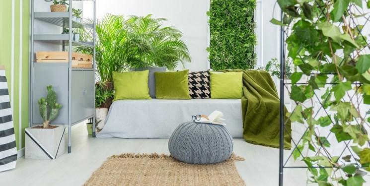 تاثیر اندک گیاهان آپارتمانی بر بهبود کیفیت هوا