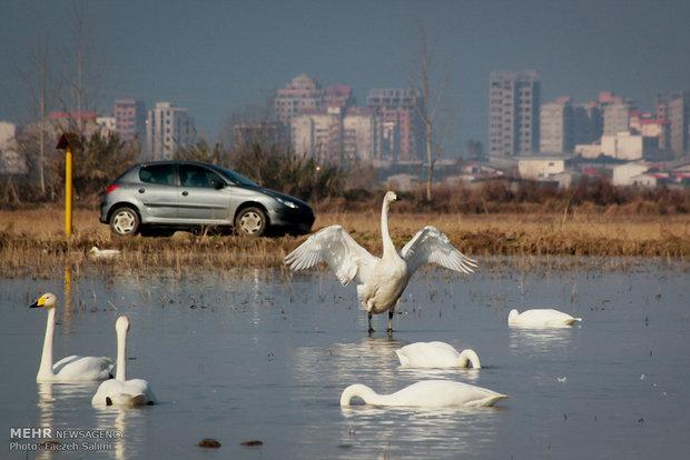 سنگینی گردشگری زمستانه روی دوش پرندگان