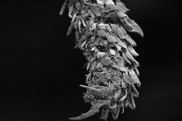 سنگ آتشفشانی مالاریا را نابود می نماید